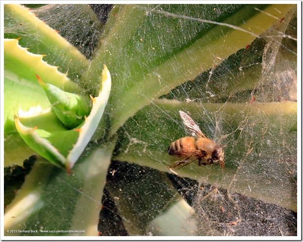 150611_spiderwebs_004