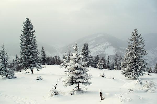 зима карпаты горы снег