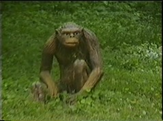 1998.06.23-002 homme préhistorique