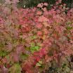 cranberry_fall 2-0.jpg