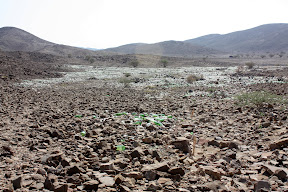 Thousands of broken bottles and other rubbish dumped near the ancient tombs at Bat. Very sad.