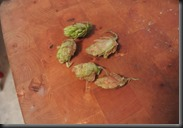 A small cluster of the hops I gathered from our run.