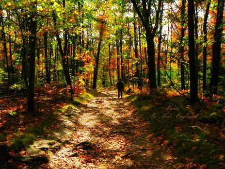 fall path1