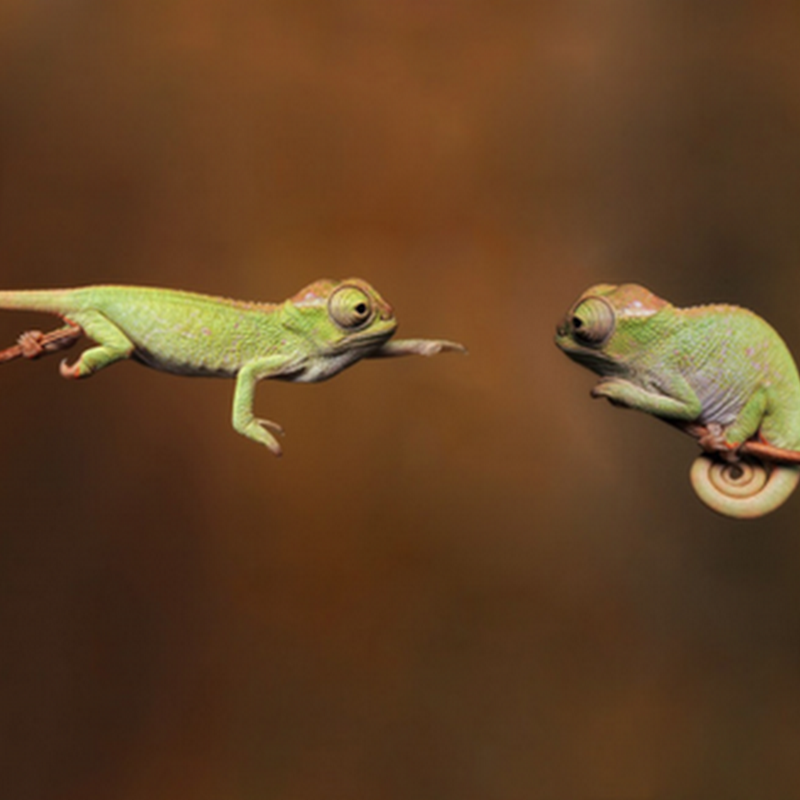 20 Perfectly Timed Animal Shots.