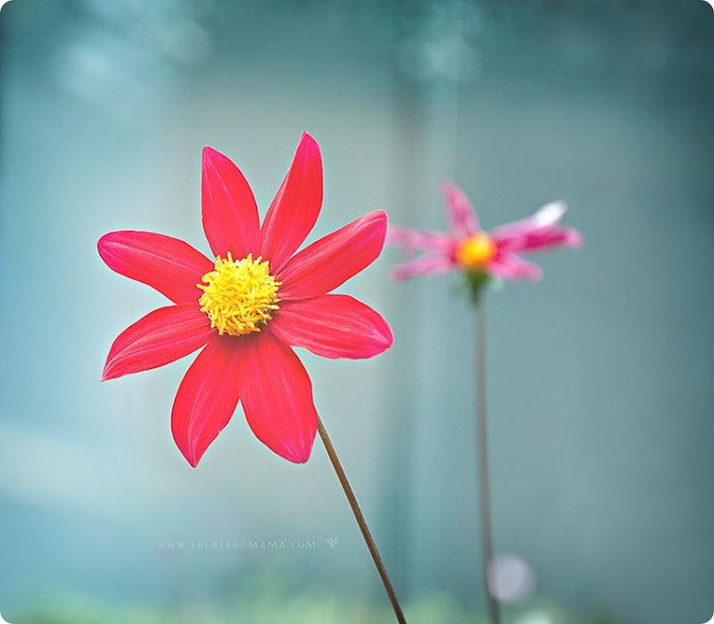 Red-flower-(1)