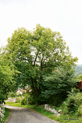 Na protějším břehu, u obce Oslovice byla v r. 1984 založena mufloní a daňčí obora.