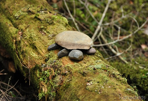 6. turtle in the woods-kab