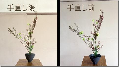手直し比較【生花正風体】ユキヤナギ、フウセントウワタ、クジャクソウ