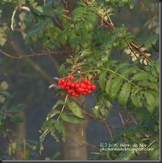 HENI_2015_10_DSC_5322_0069