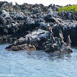 Passeio a Tintoreras - Isabela - Galápagos, Equador