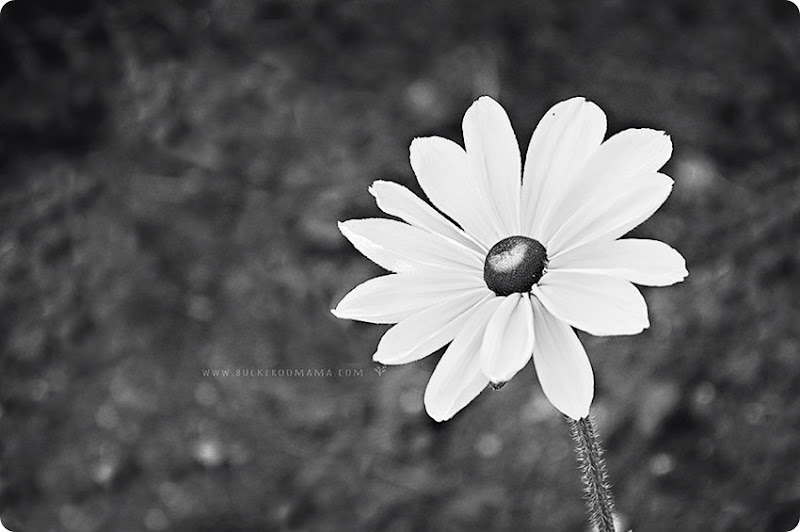 Yellow-flower-BW-(1)