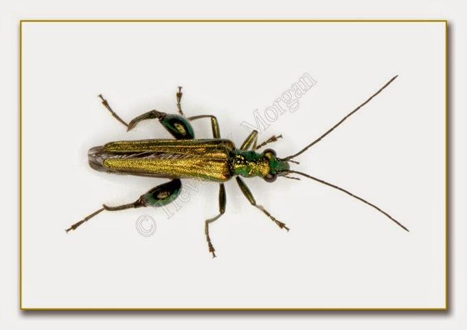 Bug 9 Thick Leg