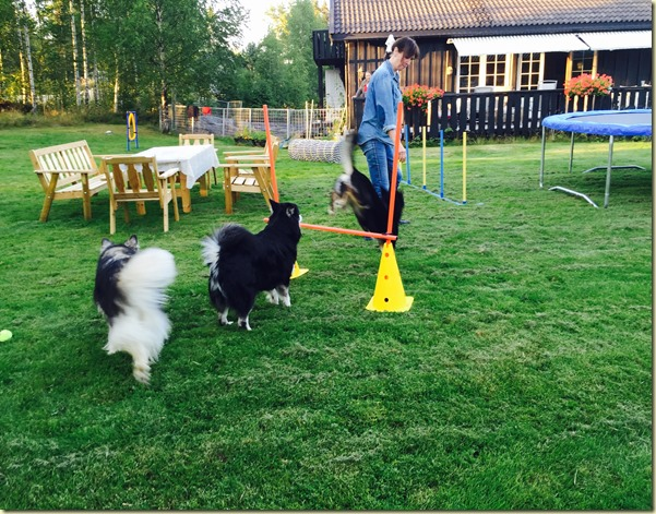 1508 I hagen alle tre agility