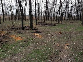лес36.jpg