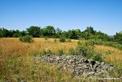 Kousek od obce se nachází Přírodní památka Rašovické skály, která chrání na svých skalnatých svazích teplomilná společenstvarostlin a živočichů.