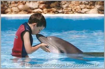 terapia-com-golfinhos