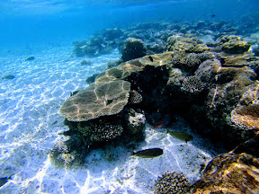 Snorkelling at Picnic Island