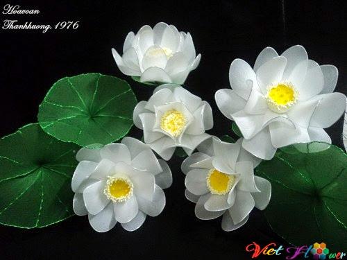 hoa sen voan