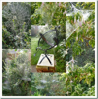 september spiderwebs