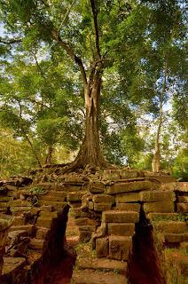 Spean Thma - ruiny dawnego mostu nad rzeką Siem Reap. Dziś porośnięte drzewami.