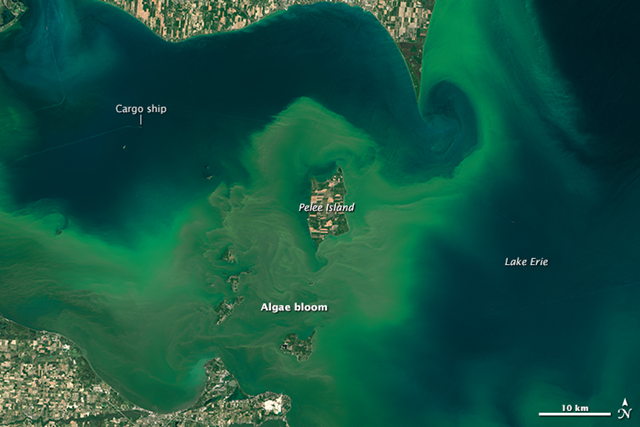On 28 July 2015, the Operational Land Imager (OLI) on Landsat 8 captured this image of algal blooms around the Great Lakes. The bloom is visible as swirls of green in western Lake Erie. Photo: Joshua Stevens / NASA Earth Observatory