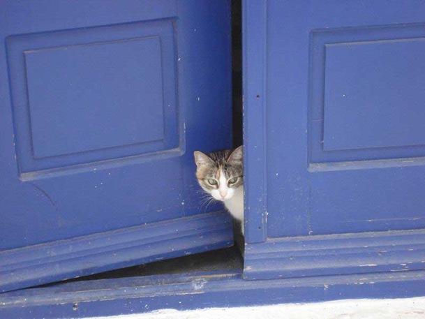 cat-blue