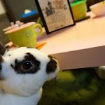 ra.a.g.f. bunny rabbit cafe in Harajuku, Tokyo in Harajuku, Tokyo, Japan