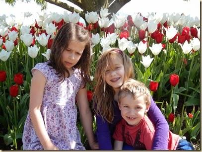 4-17 Tulips 76
