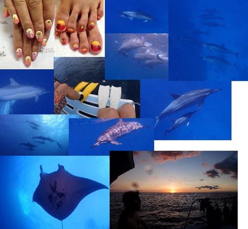 ハワイ島のイルカとマンタ