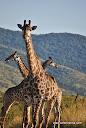 Kahle - Photo Safari