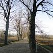 526 - aleja drzew.JPG