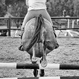 Horse jumping by Susan Van Wyk - Black & White Sports ( horse, white, black, jump )
