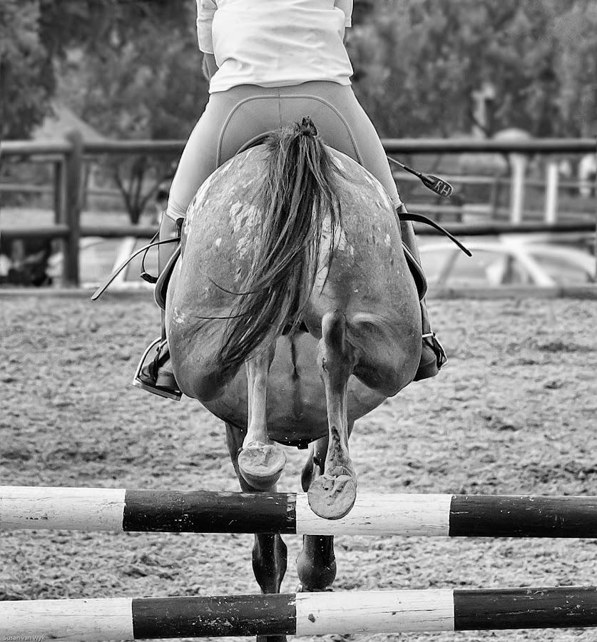 Horse jumping by Susan Van Wyk - Black & White Sports ( horse, white, black, jump )
