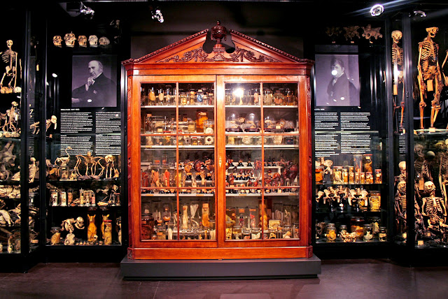 vrolik museum at AMC Amsterdam in Amsterdam, Noord Holland, Netherlands