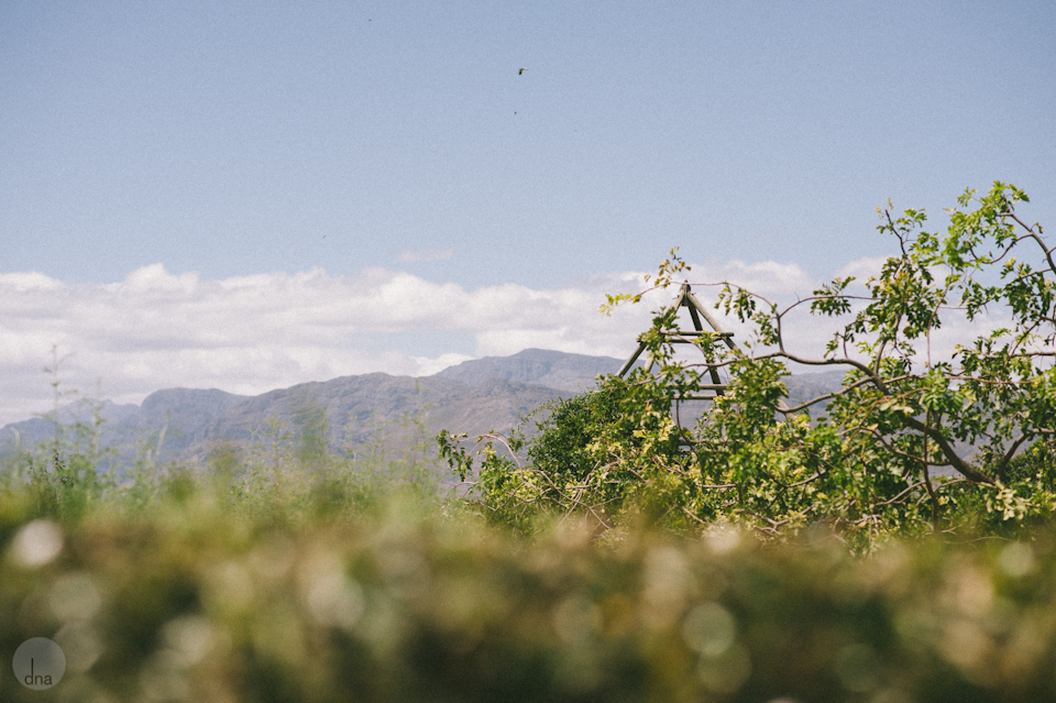 Paige and Ty wedding Babylonstoren South Africa shot by dna photographers 10.jpg
