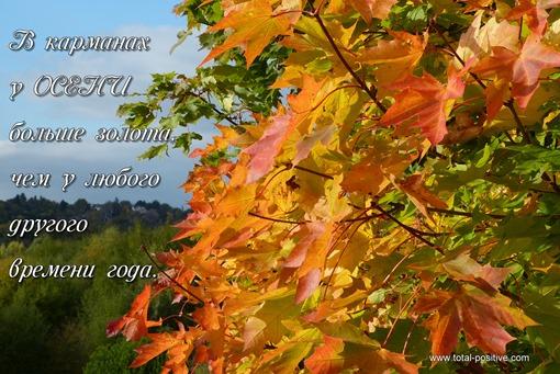 Яркие красно-желтые листья клена в парке