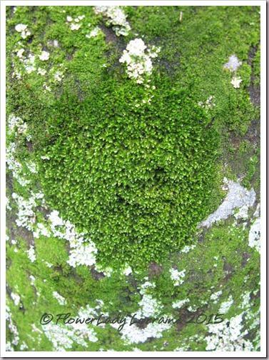 09-17-lichen