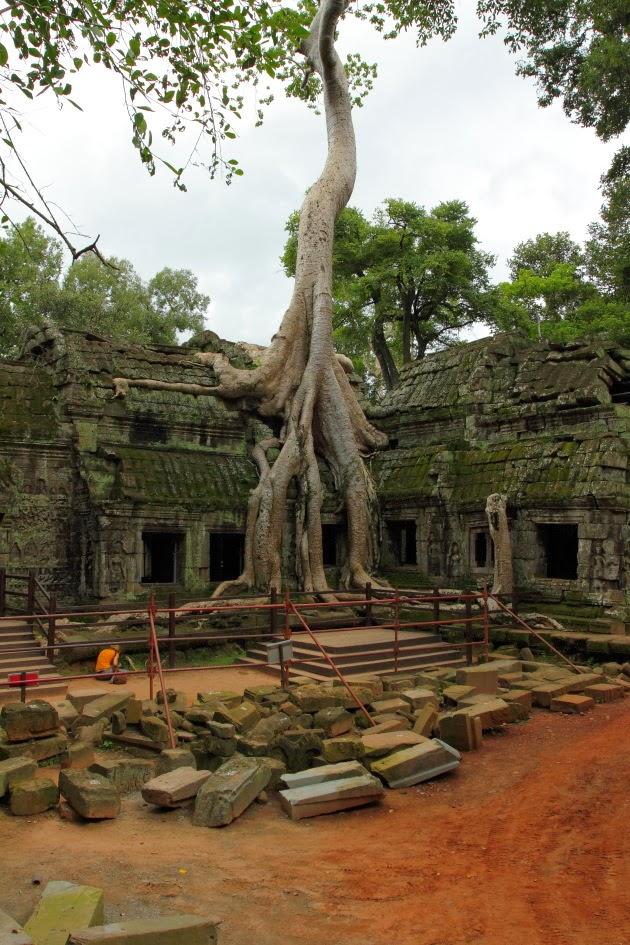 Ta Prohm - the jungle temple of Siem Reap, Cambodia