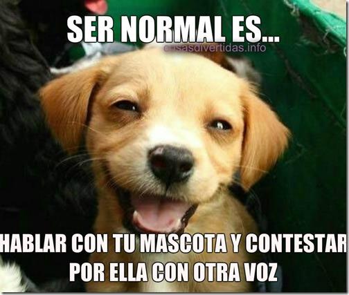 ser normal 5