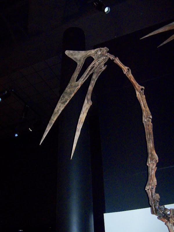 Houston Museum of Natural Science - 116_2662.JPG
