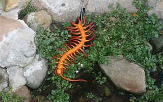 Crawly things, Sculpture by the Sea