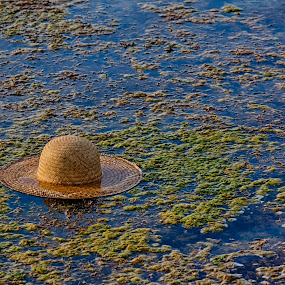 Lost Hat at Green Cay by Tim Azar - Landscapes Waterscapes ( natural area, water, lost, hdr, tim azar, green cay, heron, straw hat, hat, delray beach, wetland, florida, dfine )