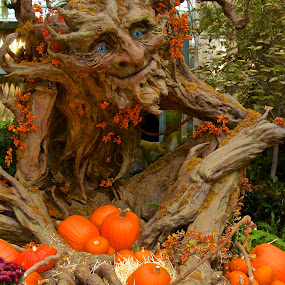 Spirit of the Pumpkin by Venetia Featherstone-Witty - Public Holidays Thanksgiving ( pumpkin spirit, colorful, pumpkins, thanksgiving, ent, halloween, pumpkin patch, tree man, nature, autumn, color, fall, pumpkin close up, harvest )