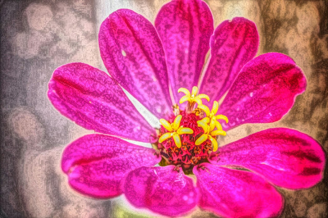 flower with pink petals