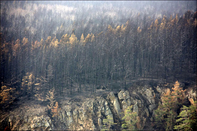 A charred stand of forest around Lake Baikal during the summer of 2015. On 11 September 2015, some 55,000 hectares were ablaze in Buryatia. Photo: Oksana Gromyko / The Siberian Times