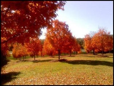 fall GA4