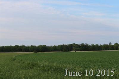 June 10 Field