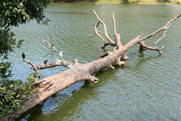 Bogambara Lake, Kandy, Sri Lanka