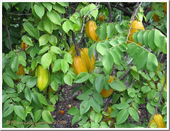 07-22-ep-starfruit