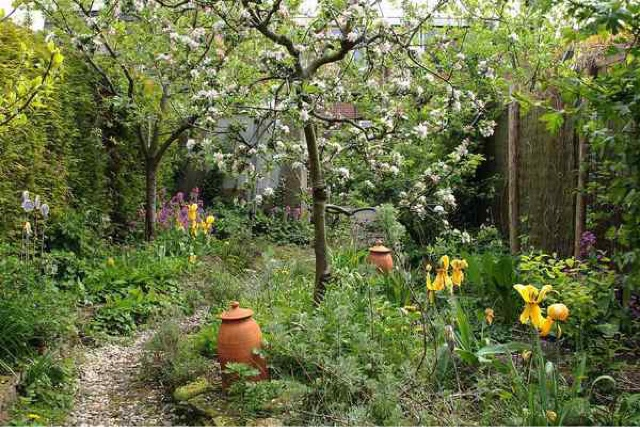 Food Forest Backyard : Young food forest in an English back yard, from the great blog